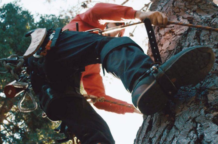 Chad Brey A Plus Climbing Pine Tree